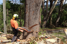 Specialist Tree Services